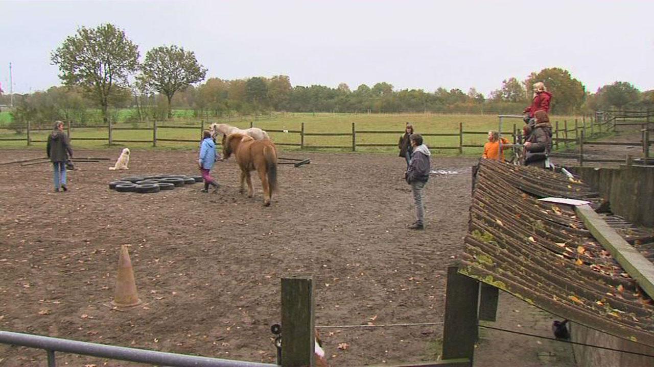 Ponys helfen Mädchen stark zu werden